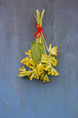 cowslip flower medical bunch on old blue wooden wall