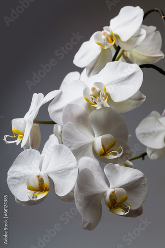 Panel Szklany white orchid