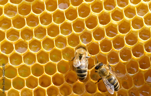 Foto op Canvas Bee bees on honeycells