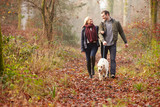 Fototapety Couple Walking Dog Through Winter Woodland