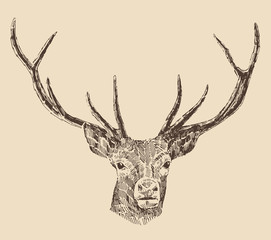 deer head engraving style, vintage illustration