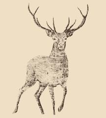 deer engraving style, vintage illustration