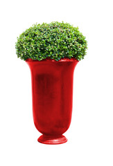 Park flowerpot with evergreen plant with clipping path