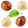 Hazelnut with leaf isolated on white