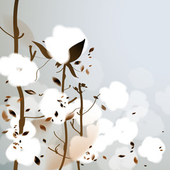 COTTON / Background with fluffy flowers
