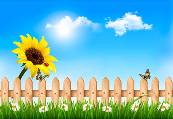 Summer nature background with sunflower and wooden fence . Vecto