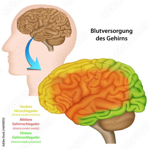 GamesAgeddon - Blutversorgung des Gehirns, Anatomie Gehirn ...