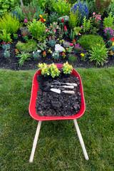 Planting a yellow celosia flower garden