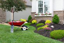 "Постер, картина, фотообои ""Planting a celosia flower garden around a house"""
