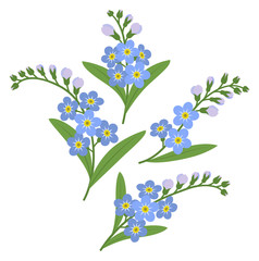 Sprigs of myosotis flowers isolated on white background