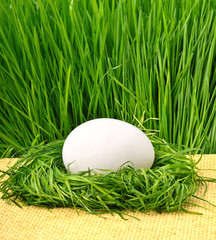 egg in the green nest against the green grass
