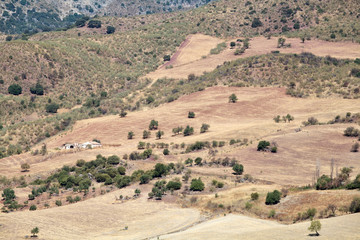 fields and hills in Andalucia