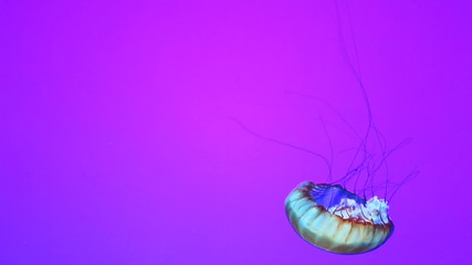 A jellyfish against a simple colorful background