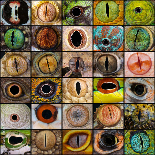 reptile eyes collection