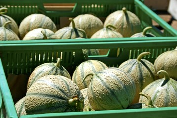 Cantaloupe melons in green boxes for sale.