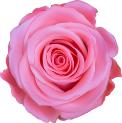 single pink rose top view illustration