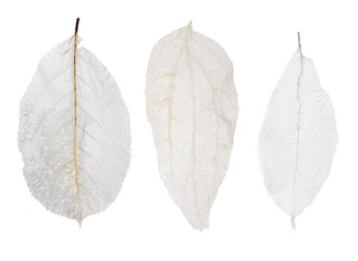 three desaturated isolated dead leaves