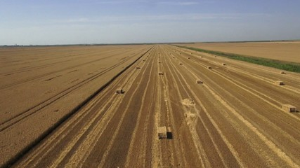 wheat field harvest