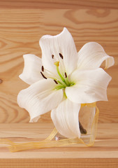 White lily isolated .
