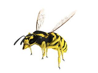 スズメバチ