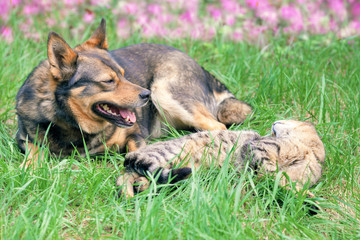 Cat and dog have a rest on the grass