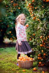 cute girl pick up harvest of orange in autumn farm