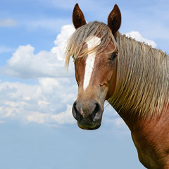 Head of a horse against the sky.