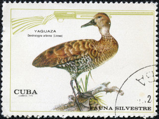 Stamp shows image of a Whistling Duck
