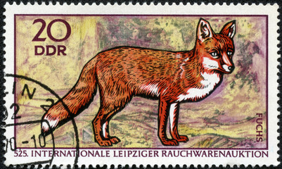 stamp printed in GDR shows Red Fox