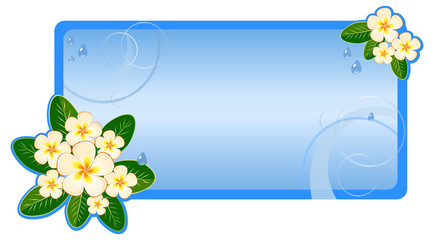 Card design, invitation with flowers frangipani (plumeria)