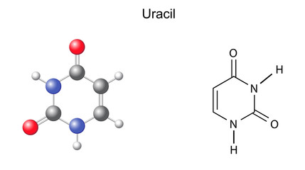 Chemical structural formula and model of uracil