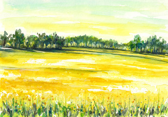 Rapeseed field.Watercolors