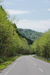 初夏の山間の道