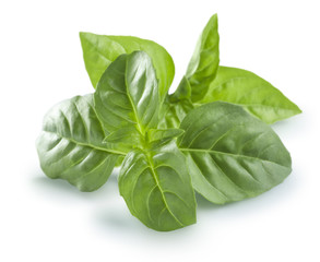 Fresh basil leaves isolated on white background sunny option