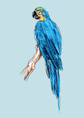 Hand colored drawing a parrot. Vector illustration