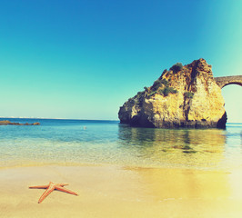 Rocky beach with a shellfish on the sand, Lagos, Portugal