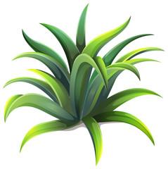 A dwarf agave plant