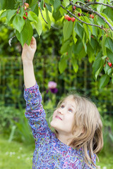 little girl picking a cherry