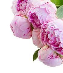 border of pink peonies