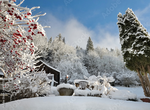 jardin en hiver - 66187500