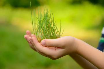 Kid's hands holding green growing plant over nature background.