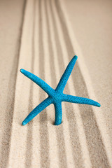 Star sticking out in the sand