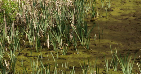 Lots of green typha grasses FS700 4K Odyssey7Q