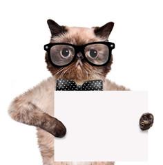 placeholder banner cat