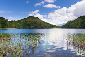lake alatsee in bavaria germany with reeds and blue sky