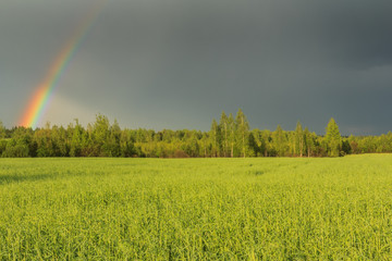 Sky rainbow above field and forest after storm