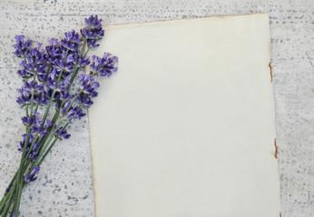 Alte leere Buchseite und Lavendel