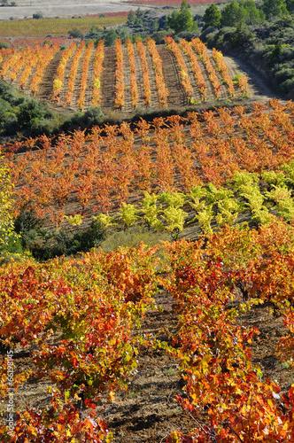 Papiers peints Culture Vignes en corbières