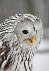 Prawie jak Hedwiga