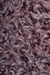 Karakul fur texture